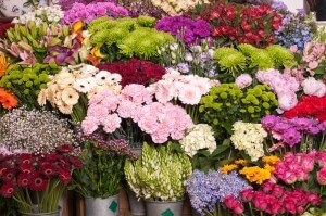 Foto af blomsterudvalget hos Amager Blomster