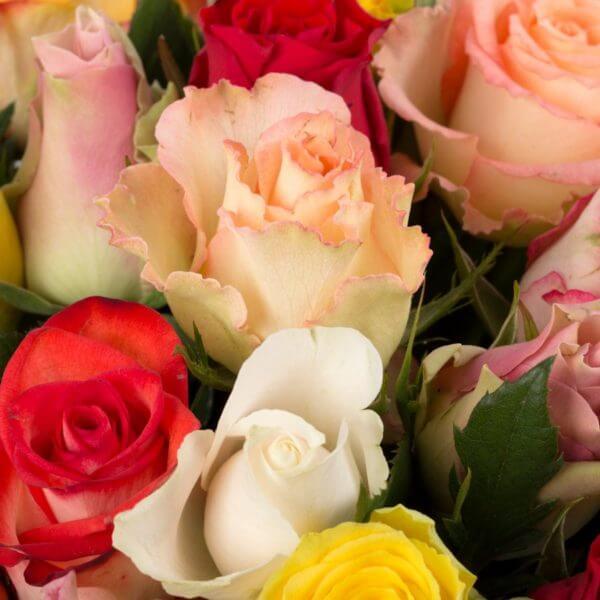 Kulørte Roser, zoom