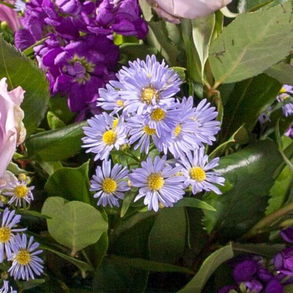 Båredekoration, blå og lilla, zoom 2