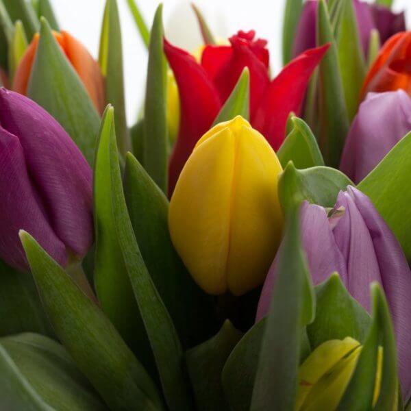 Blandede Tulipaner, detalje 1