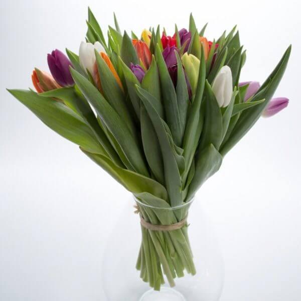 Blandede Tulipaner, fra siden
