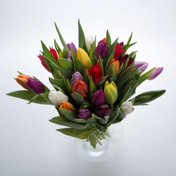 Blandede Tulipaner, fra oven