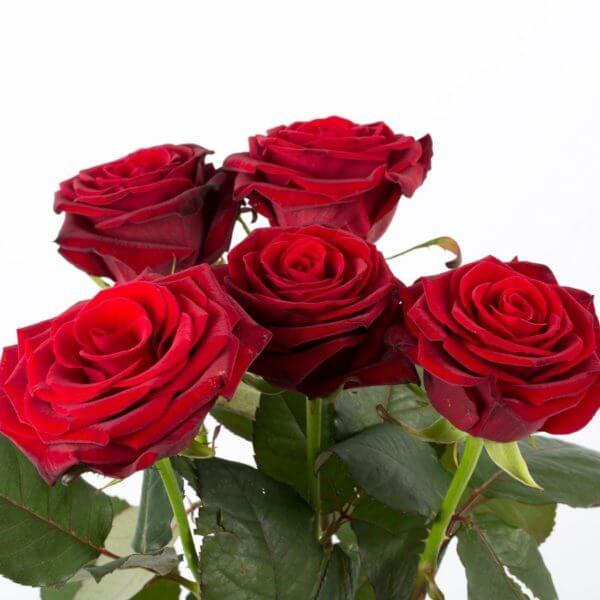 5 Langstilkede røde Roser, zoom1