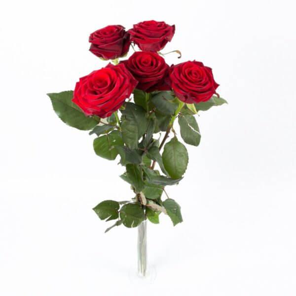 5 Langstilkede røde Roser, ovenfra 1