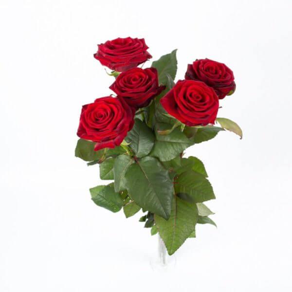 5 Langstilkede røde Roser, ovenfra 3