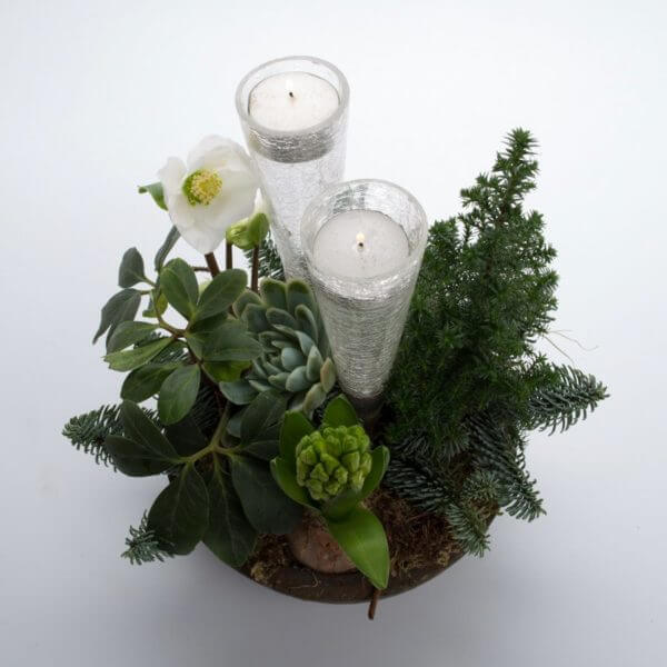 Hvid Julesammenplantning, fuld