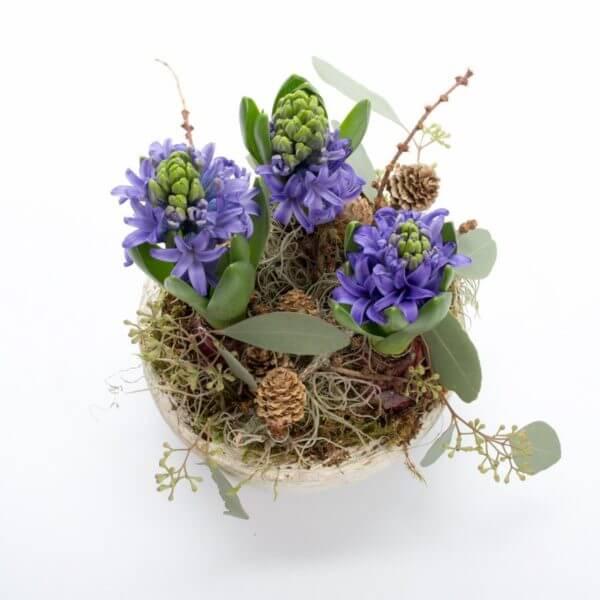 Hyacint sammenplantning, ovenfra