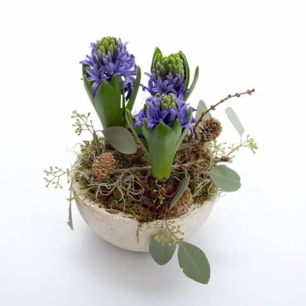 Hyacint sammenplantning, fuld