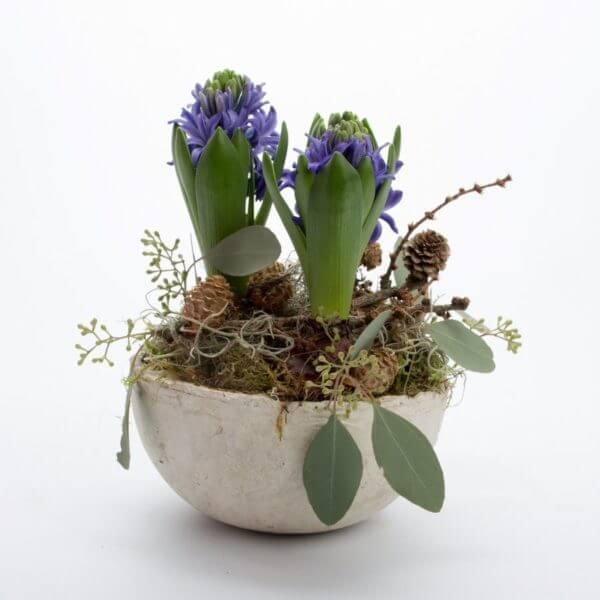 Hyacint sammenplantning, fra siden