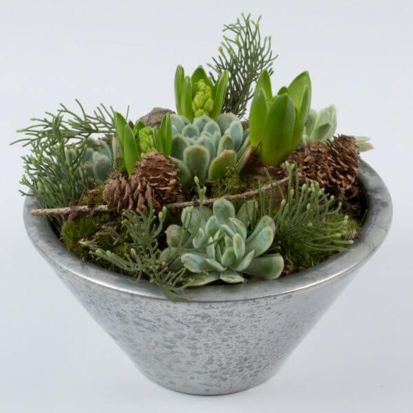 Julesammenplantning, hyacint og husløg, forfra 1