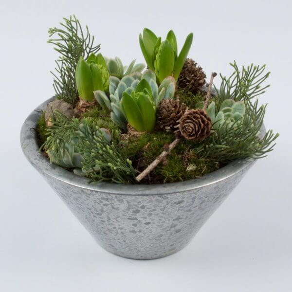 Julesammenplantning, hyacint og husløg, forfra 3