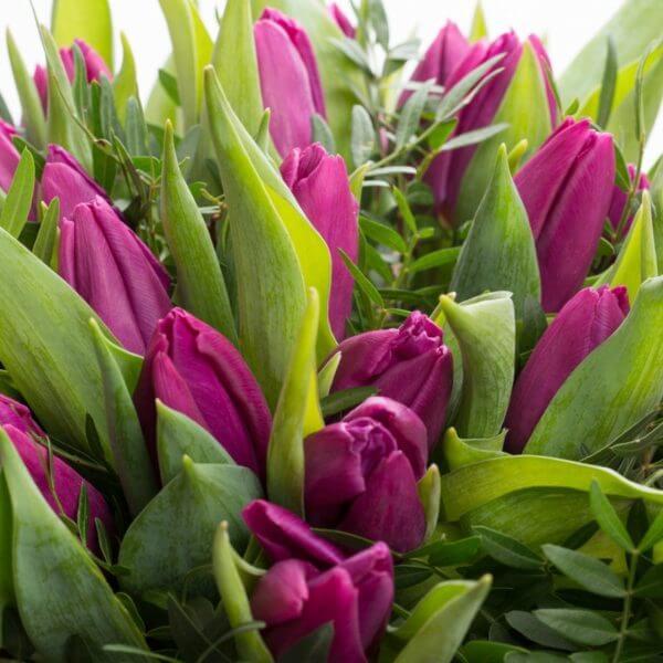 Lilla Tulipaner, detalje 1