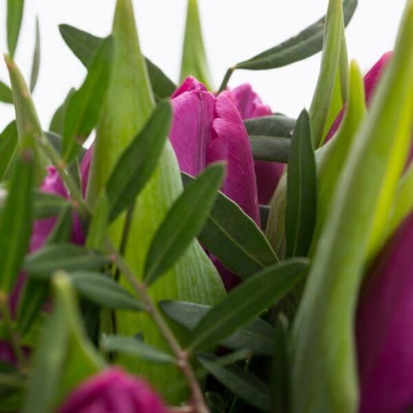 Lilla Tulipaner, detalje 3