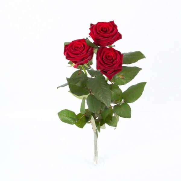 3 Langstilkede røde Roser, ovenfra
