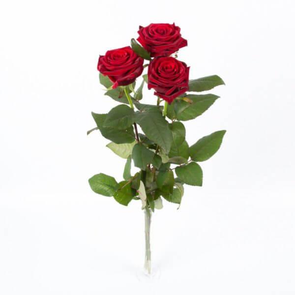 3 Langstilkede røde Roser, zoom 1