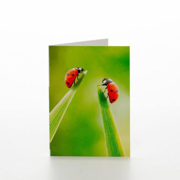 Mariehøner på græsstrå blomsterkort